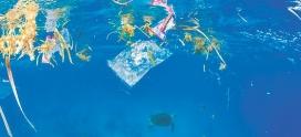 Bioplastiche o plastiche degradabili, quale migliore soluzione per la economia circolare?